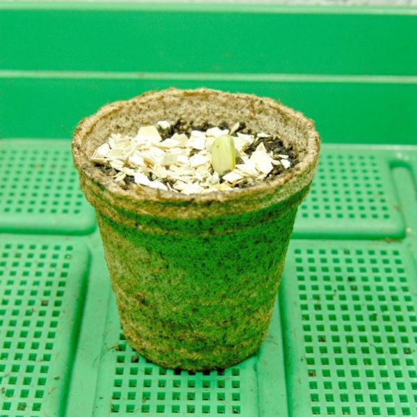10 Stk. Anzuchttöpfe aus Kokosfasern