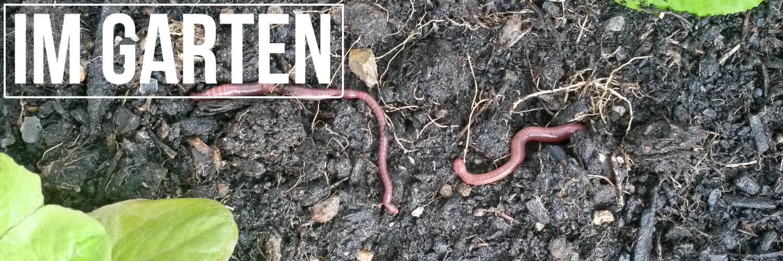 Mit dem Wachstumsförderer Wurmkompost und Kompostwürmer wachsen auch deine Pflanzen grösser und stärker.