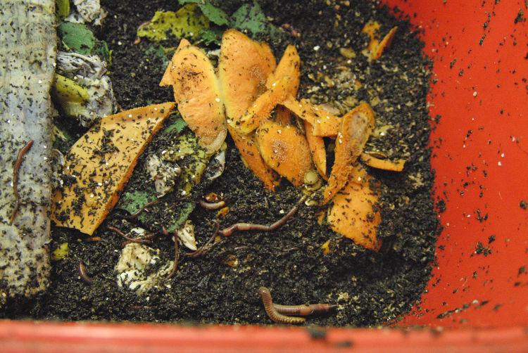 Organische Abfälle mit hohem Wasseranteil führen häufig zu grosser Nässe im Wurmkomposter