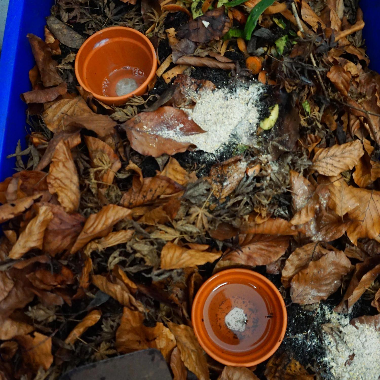 Zwei mit Wasser gefüllte Tontöpfe in einem Wurmkomposter dienen als Wasserspeicher bei trockenem Wetter.